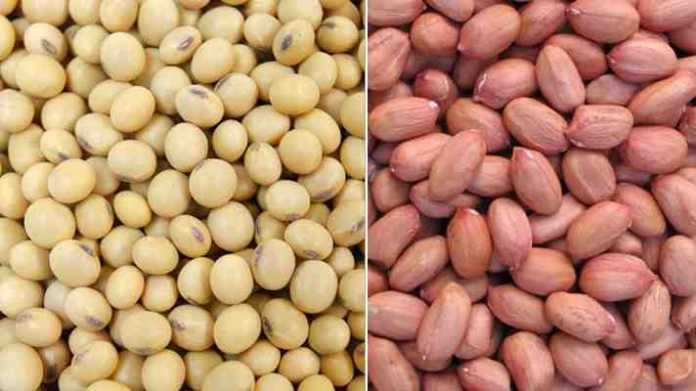 soybean and mungfali seeds for sowing