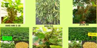 soybean newly develop variety