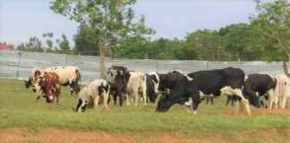 Veterinary Relief Society