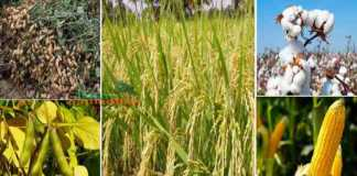 kharif crops MSP 2021