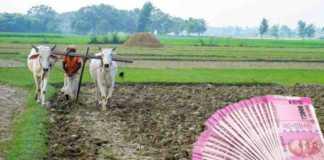 new loan for loan waiver farmer