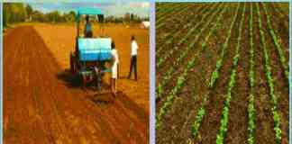 soybean sowing advice