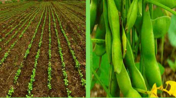 things to do before soybean sowing