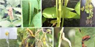 advisories for soybean farming