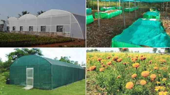 poly house shednet house flower and vegetable farming subsidy
