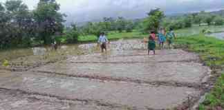 weed control in paddy