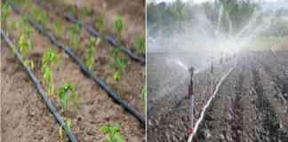 Drip sprinkler set on subsidy