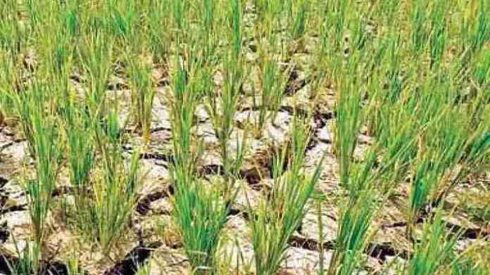 compensation for crop loss