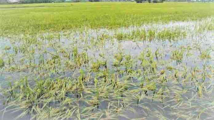 crop damage complaint