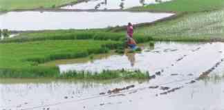 khad-beej-loan-for-kharif-crop