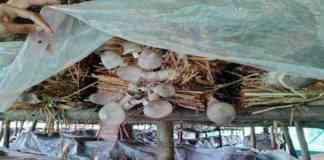 mushroom production training