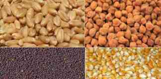 rabi crop seeds subsidy