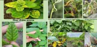 soybean keet-rog niyantran state wise