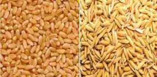 subsidy on wheat and paddy seeds