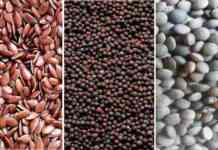 free seeds distribution