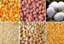 kharif crop production 21