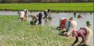 landless agricultural labor justice scheme