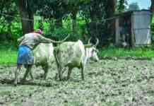 nso report on agriculture income and loan