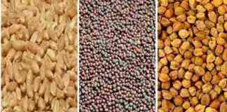 rabi crop seeds distribution