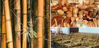 subsidy on bamboo business