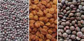 chana sarso seed subsidy
