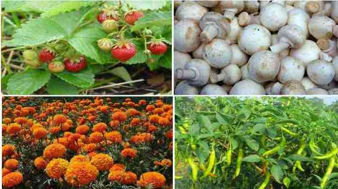horticulture crop production training